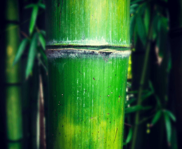 Super Bamboo: Resilience and Integrity