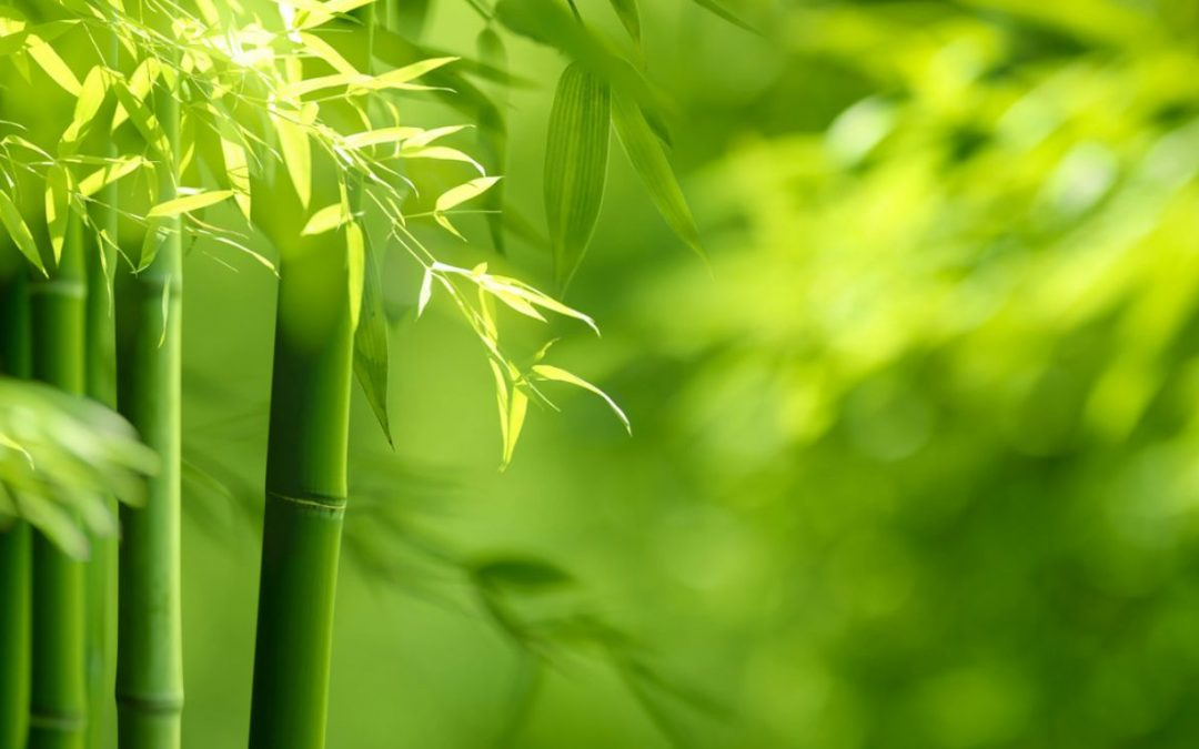 Bamboo Wisdom: Transcendence and the Collective Self