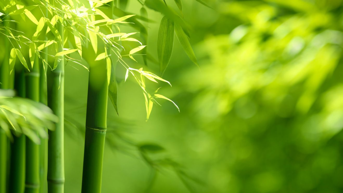 Bamboo wisdom and transcendence