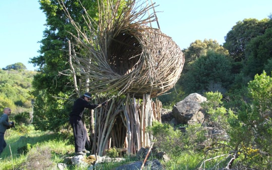 Go nest, young man: Jayson Fann's tree dwellings