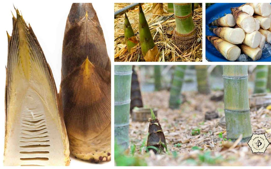 Bamboo Shoots: Edible, sustainable and nutritional