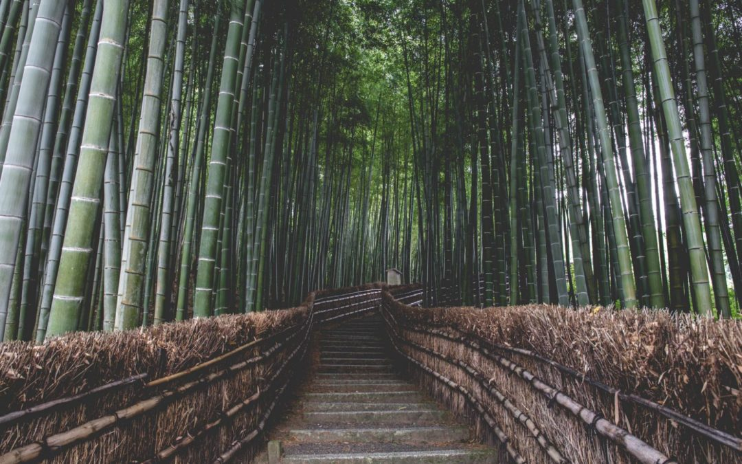 20 of the World's Best Bamboo Gardens