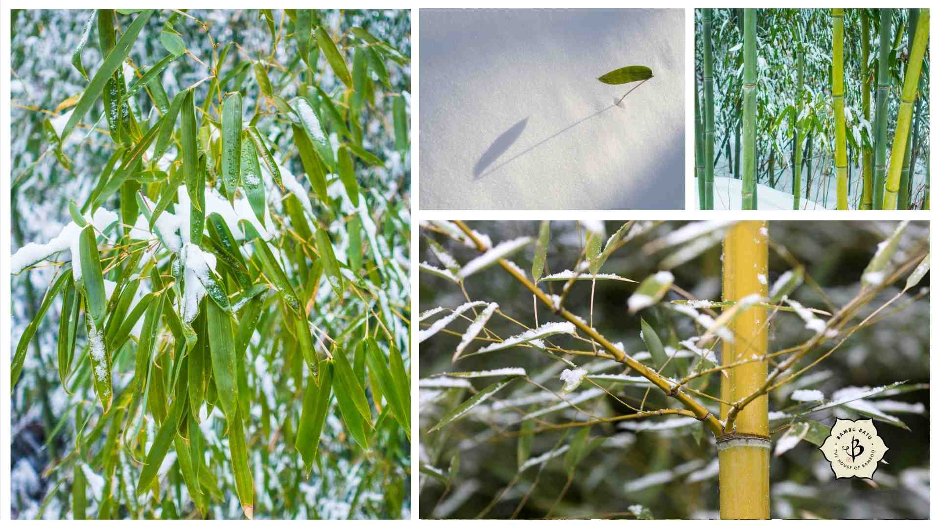 Bamboo snow and cold collage