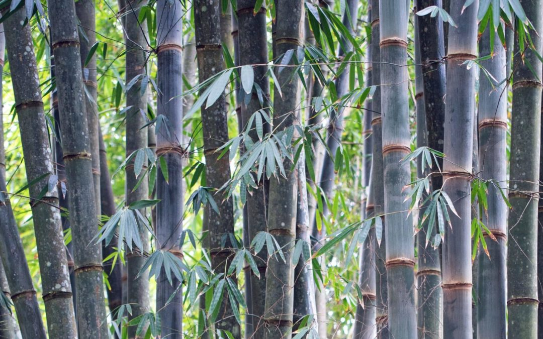 12 Common Questions about Bamboo: Ask the experts