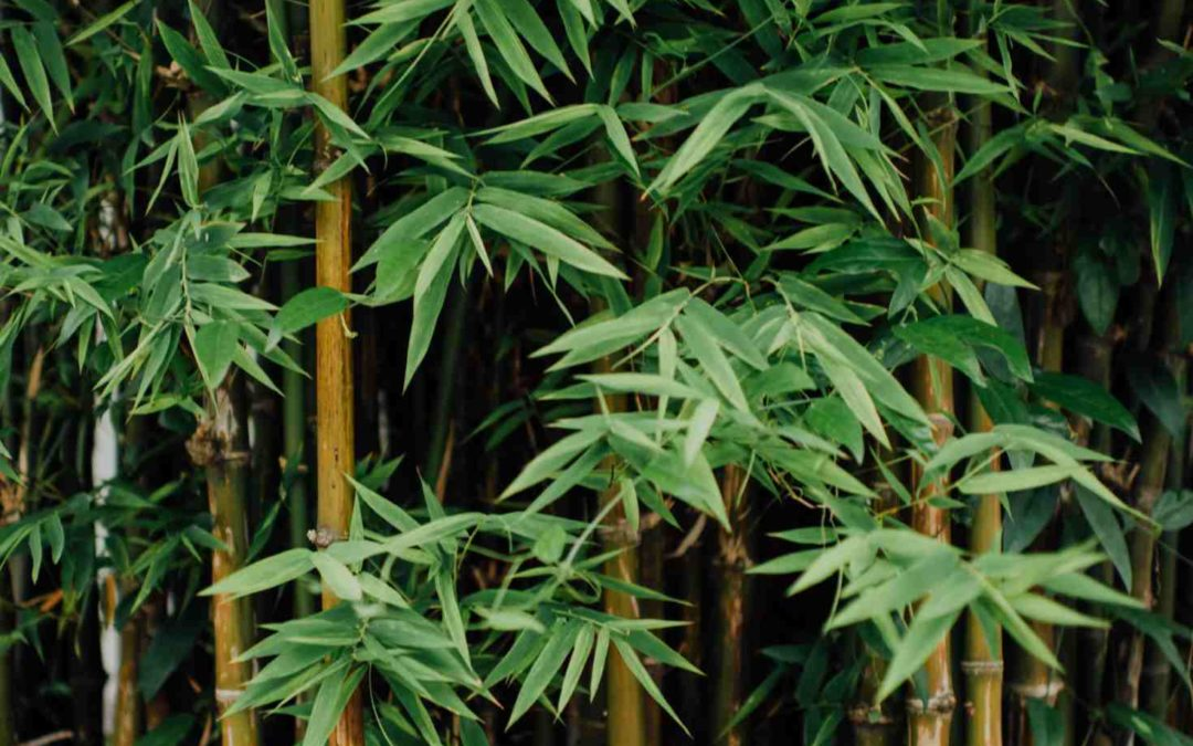 Whats so great about bamboo