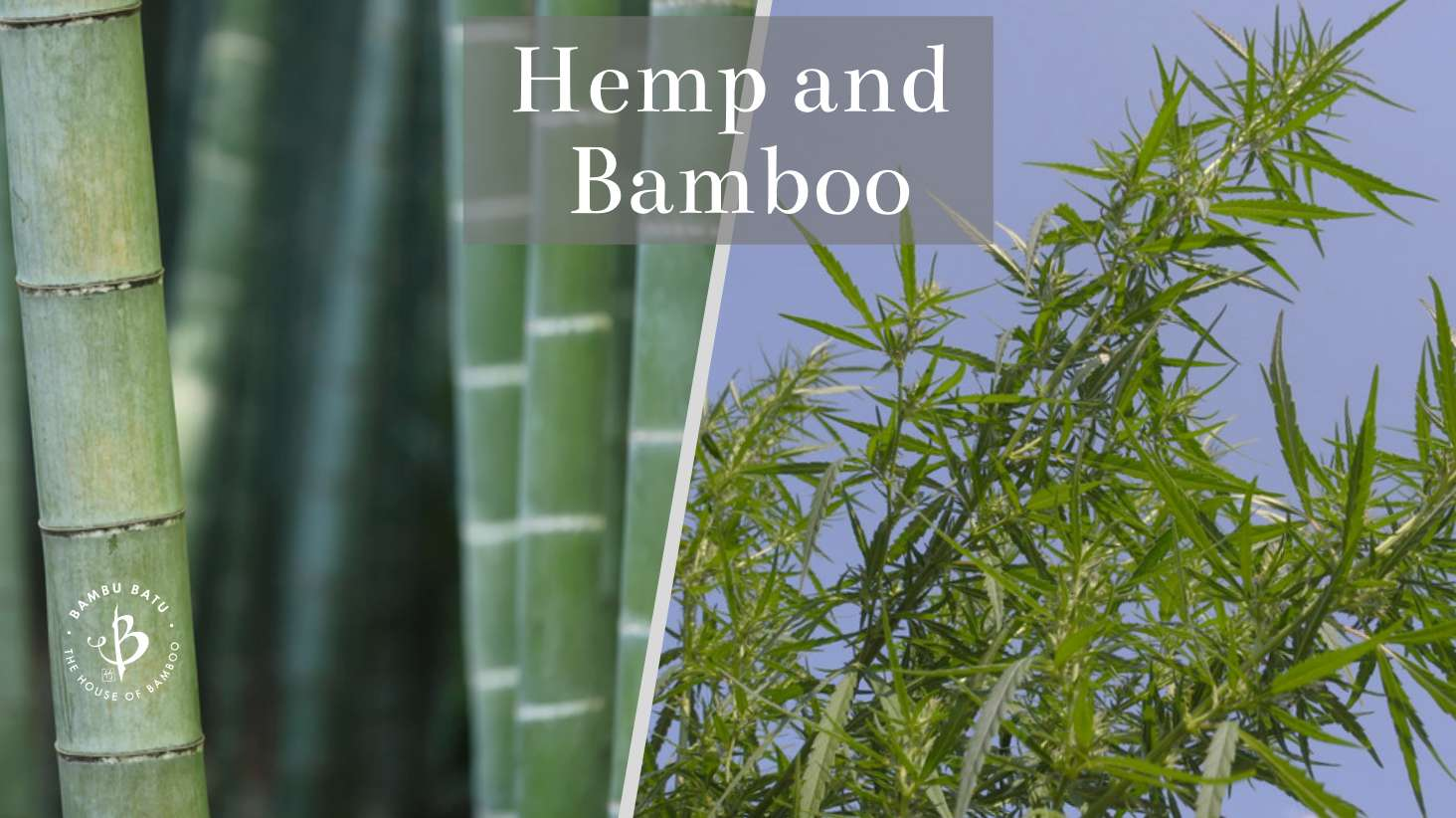 Hemp and Bamboo ultimate comparison