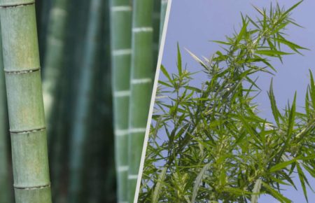 Hemp and bamboo the ultimate comparison