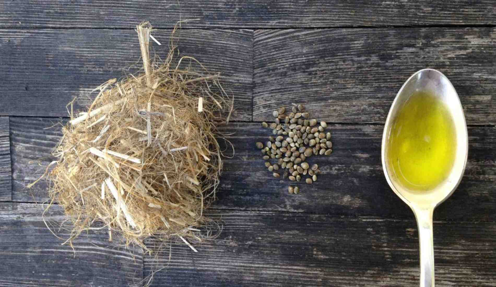 Hemp for fiber, seed and oil