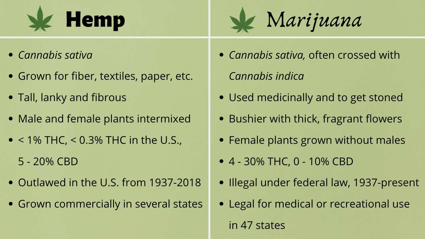 Hemp vs Marijuana infographic