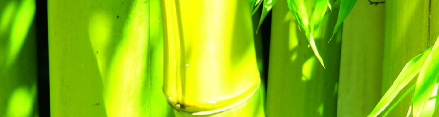 Phyllostachys groove