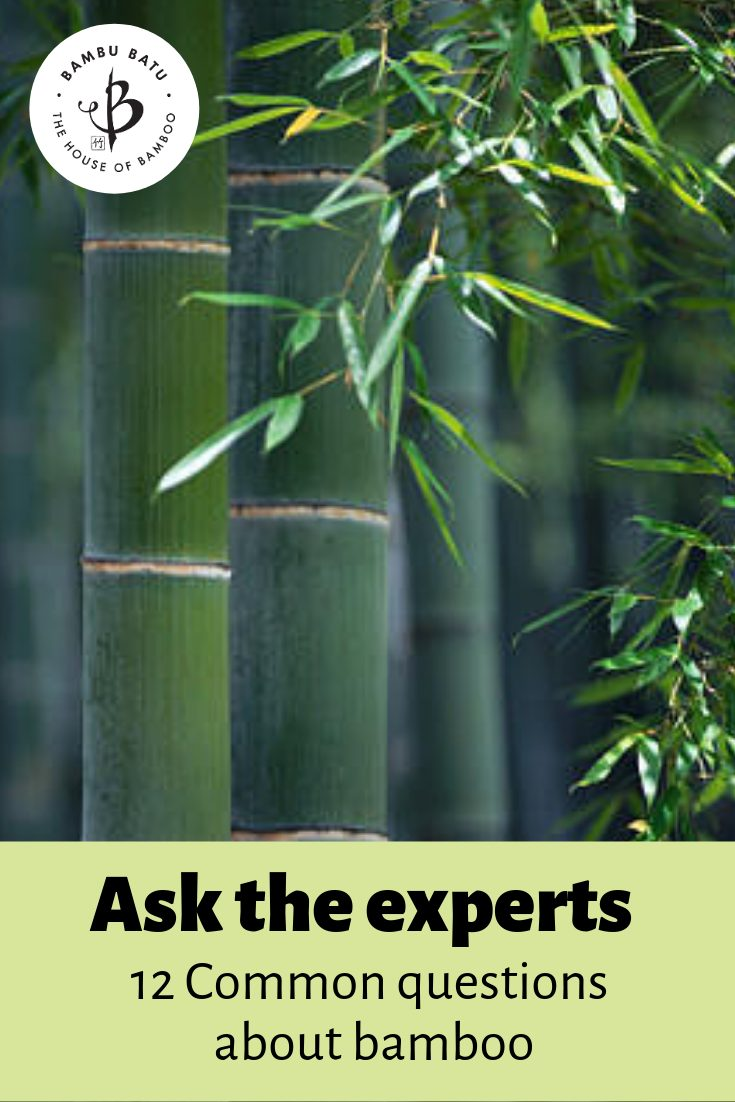 Bamboo FAQ pin