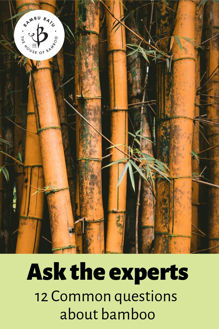 Bamboo FAQs pin