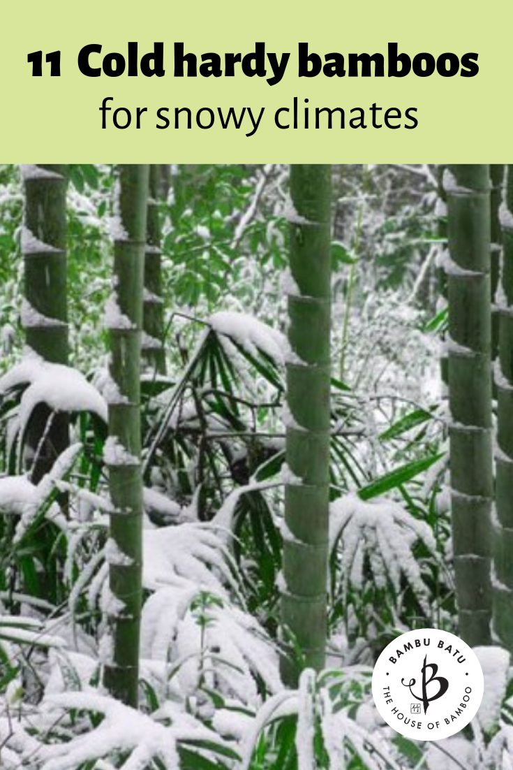 Bamboo cold hardy pin