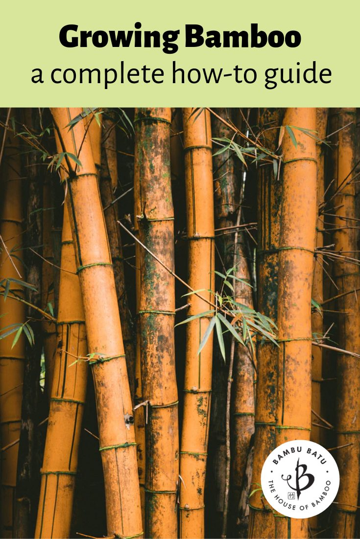 Bamboo growers guide pin
