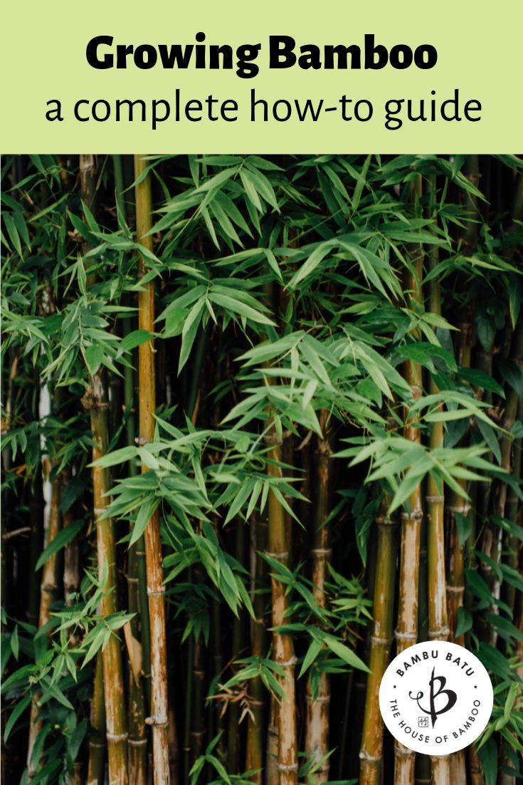 Bamboo growing guide pin