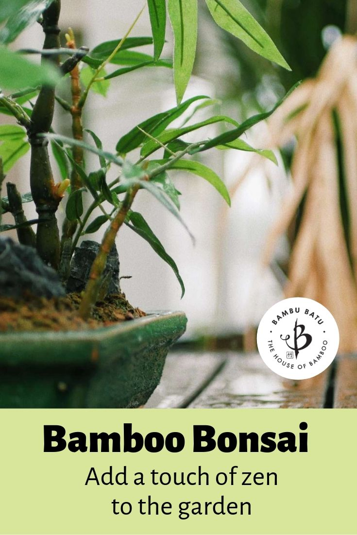 Bamboo bonsai pin