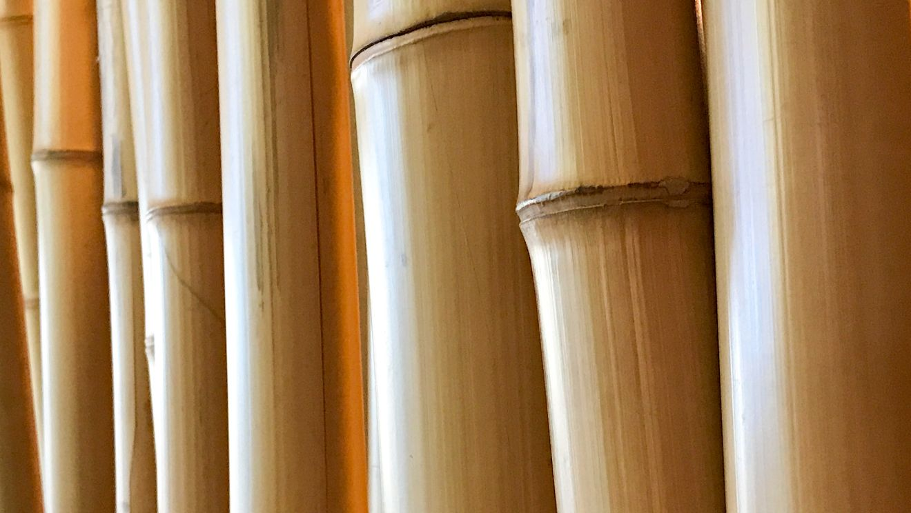 Best bamboo for poles