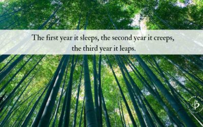 Bamboo Proverbs: 9 Great quotes about bamboo