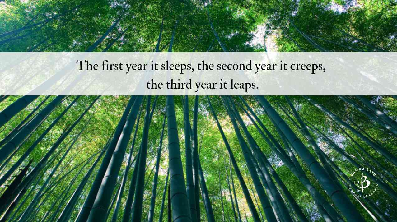 Bamboo quotes and proverbs