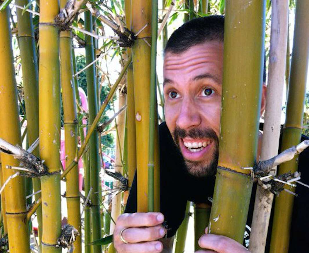 Surprising uses for bamboo