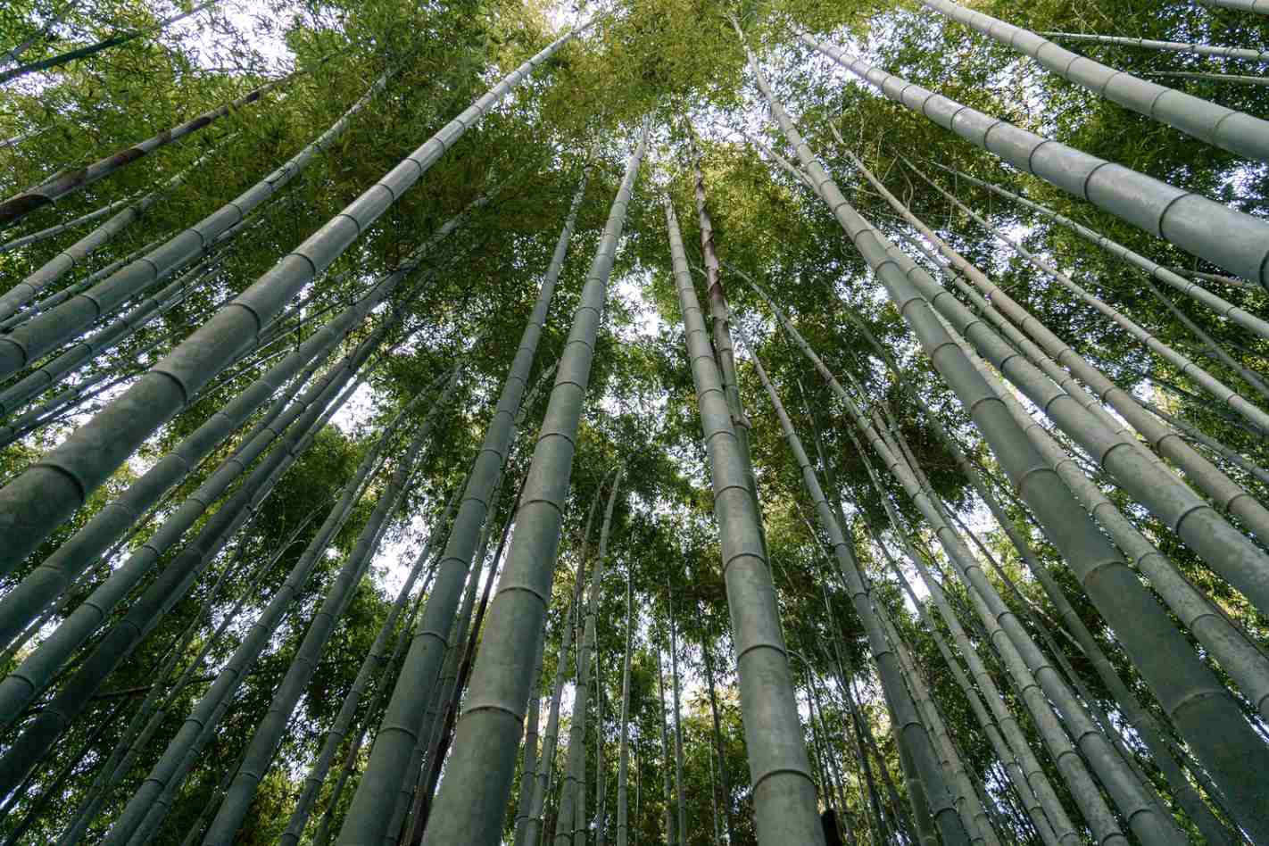 Bamboo for ecology