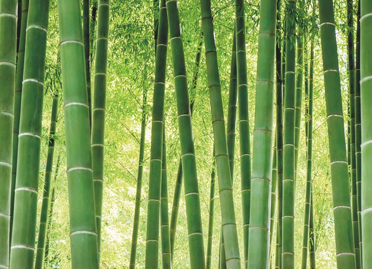Investing in Bamboo