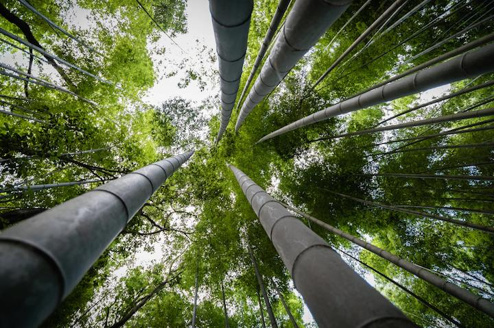 Bamboo for fuel and energy: Another green solution