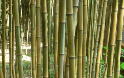 Laws against bamboo in Pennsylvania