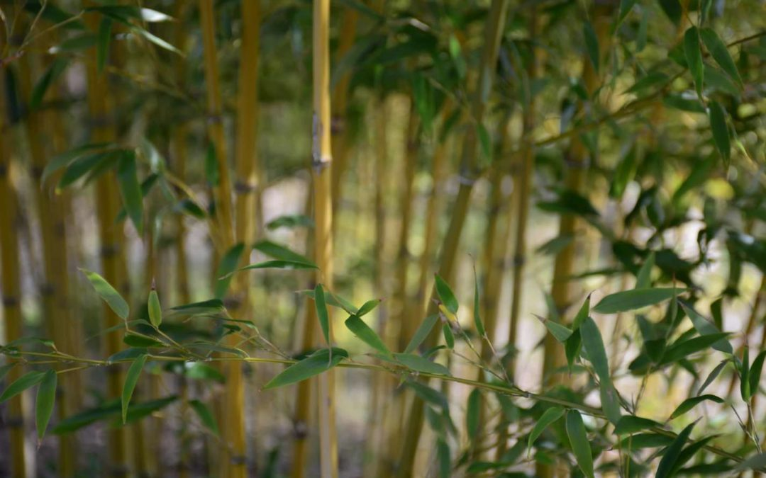 5 Fun things to do in your bamboo garden in quarantine