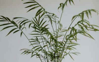 Plants that look like bamboo (but aren't)