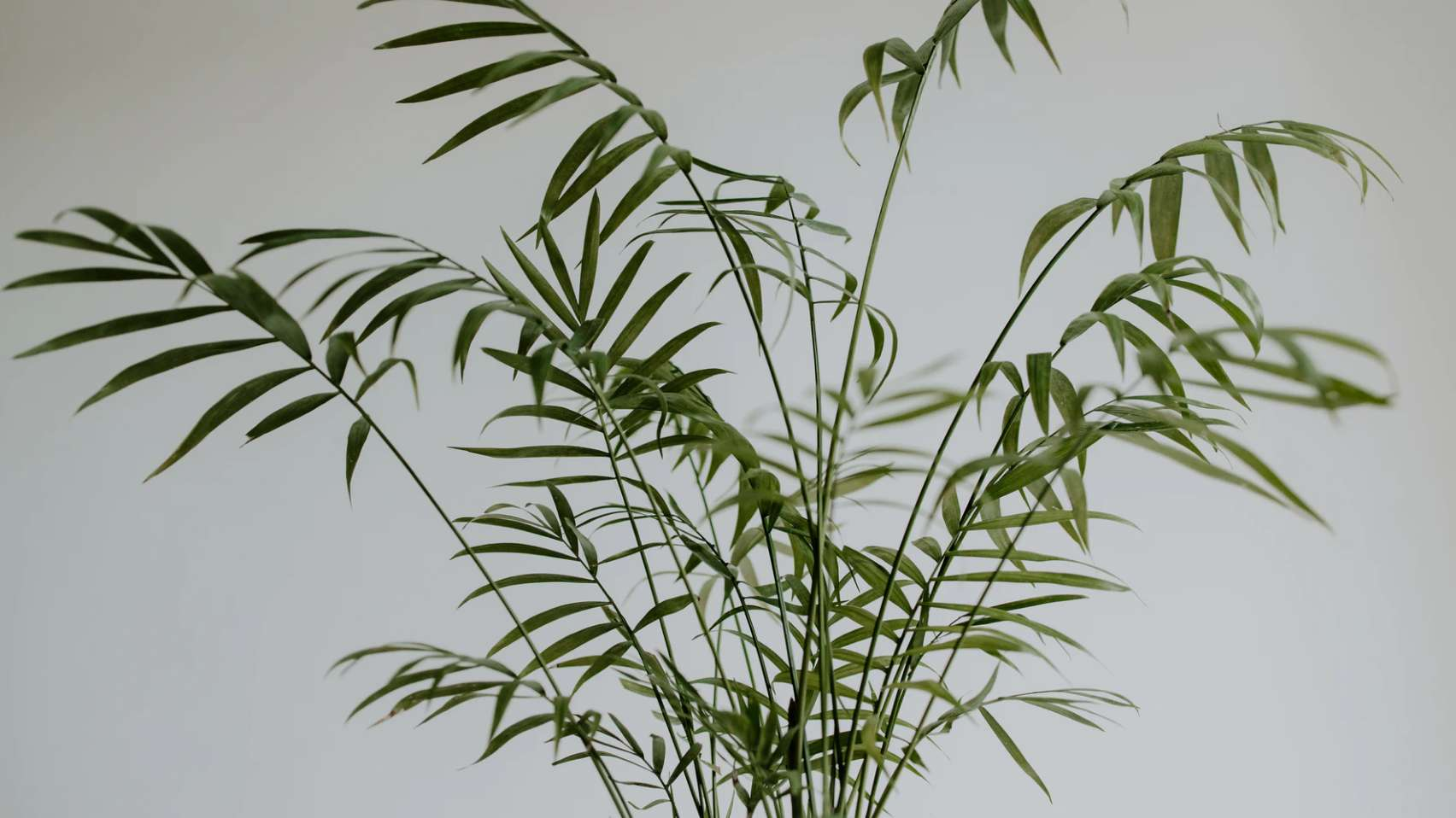 Plants that look like bamboo