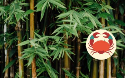 Bamboo and Astrology: In the sign of Cancer