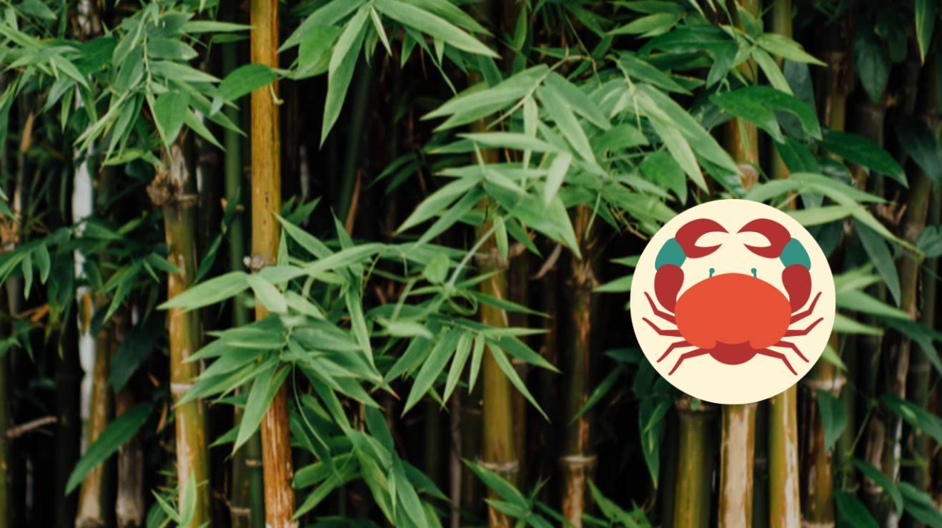Bamboo astrology sign of Cancer