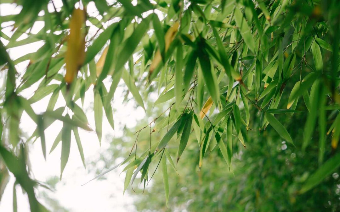 Bamboo in the shade