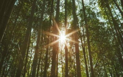 9 Reasons why bamboo is a more sustainable alternative
