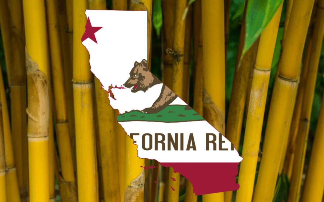Where to find bamboo in California