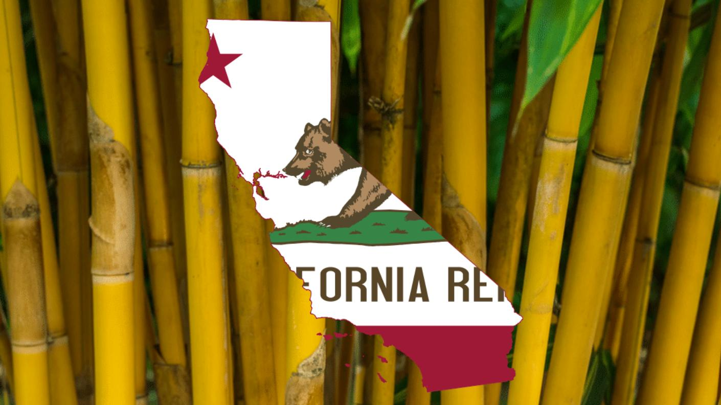 Finding bamboo in California