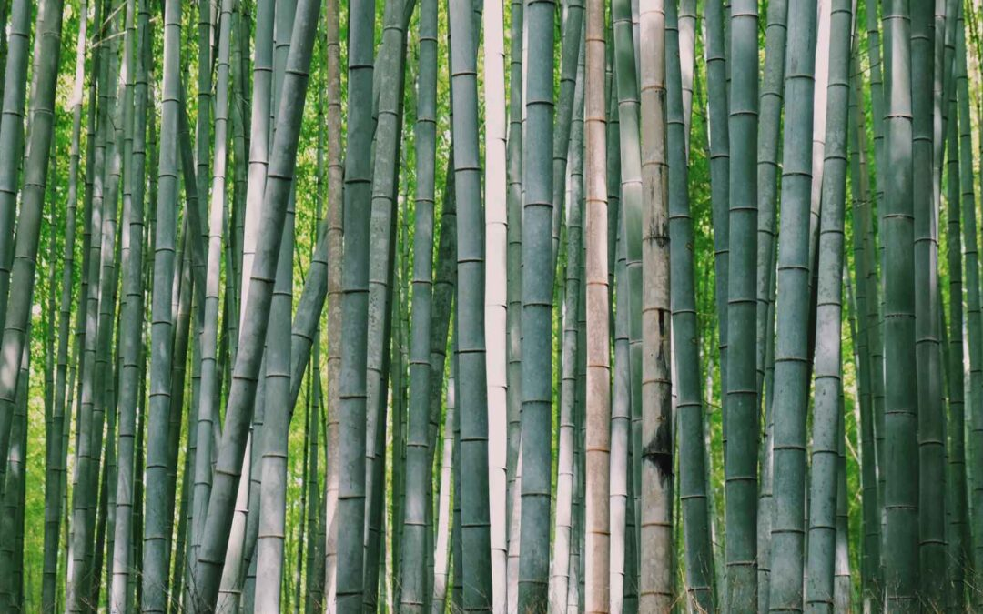 7 Most useful species of bamboo