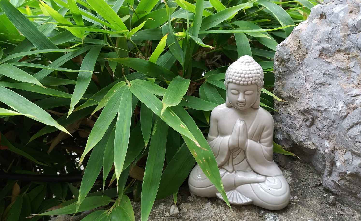 Buddha and Bamboo for good luck