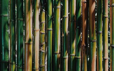 Several ways to treat bamboo for building