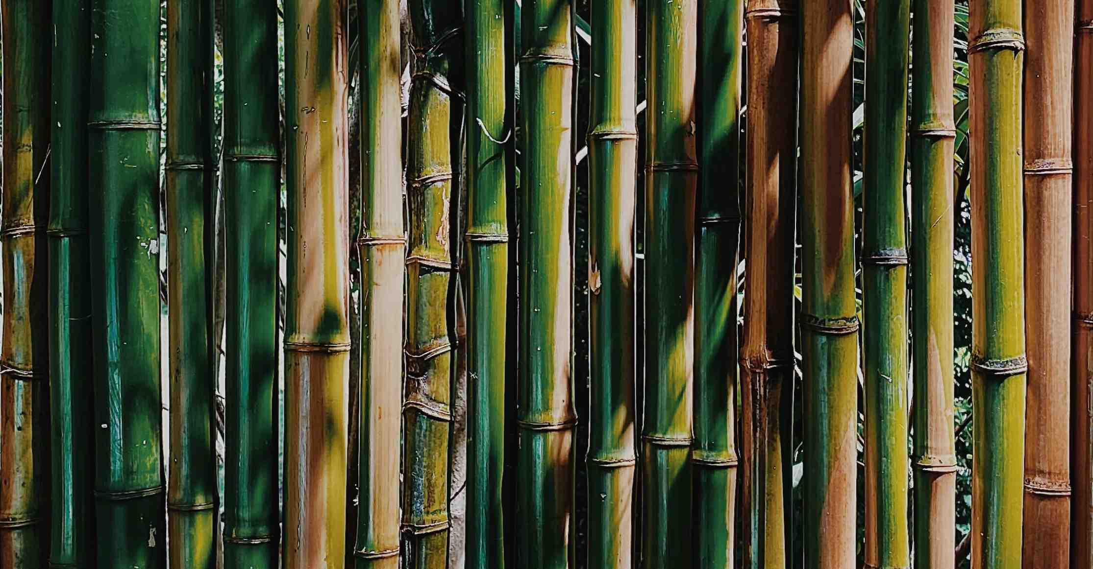 How to treat bamboo poles