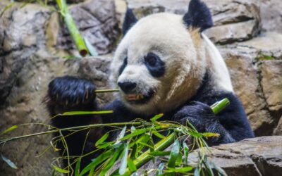 Eating bamboo: 9 species to grow for food