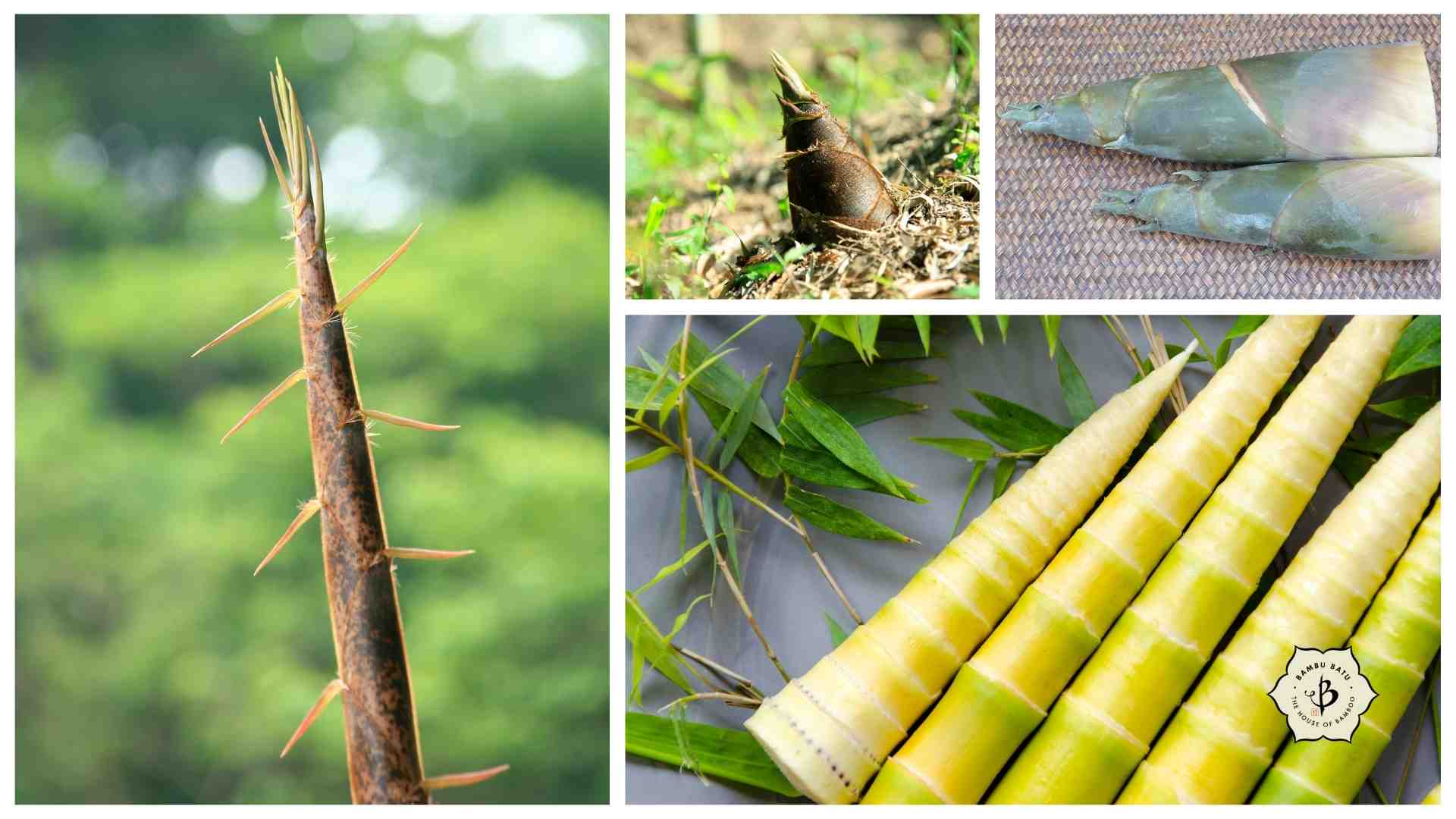 Best bamboo shoots for eating