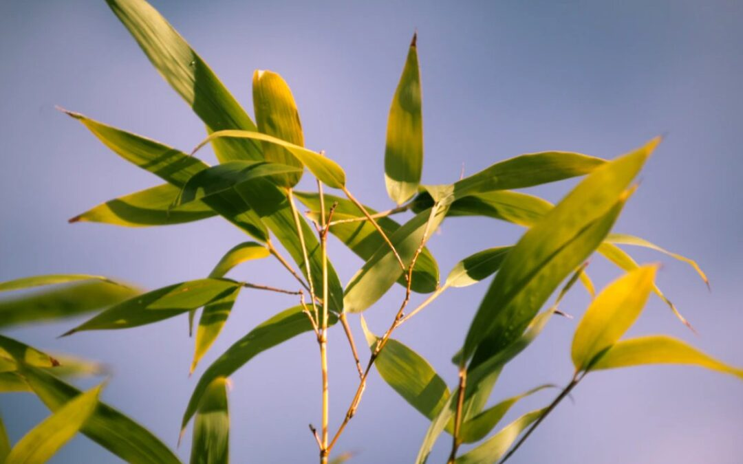7 Troubleshooting tips for growing healthy bamboo