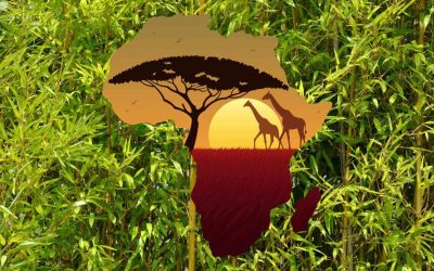 Bamboo in Africa: A green bounty