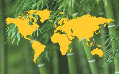 Where does bamboo come from?
