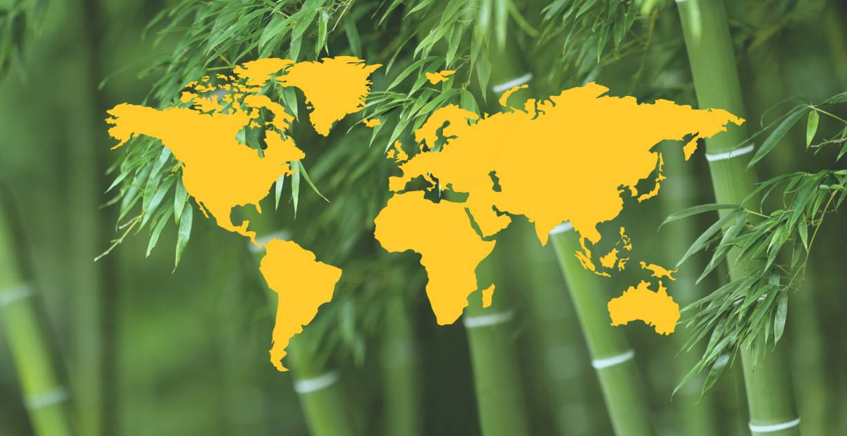 Where does bamboo come from