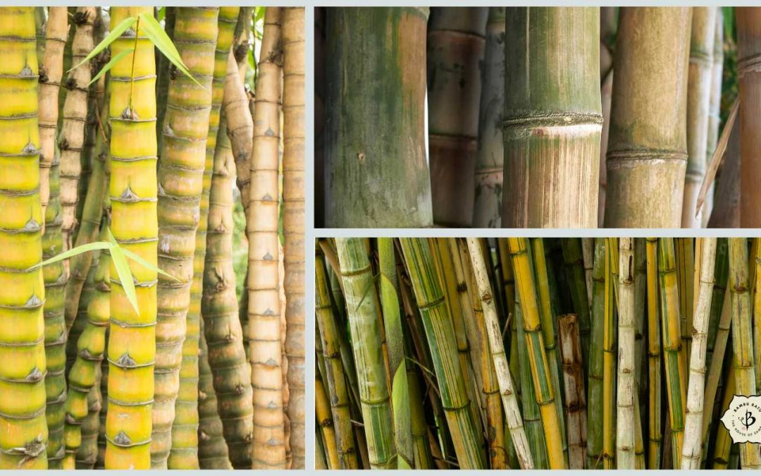 Tropical bamboo for Florida