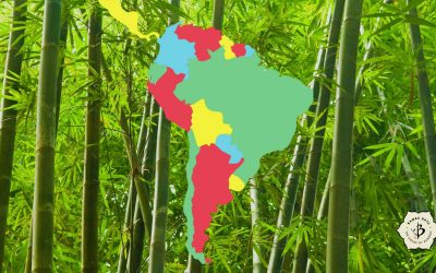 Bamboo of South America: Ornamental and economic species