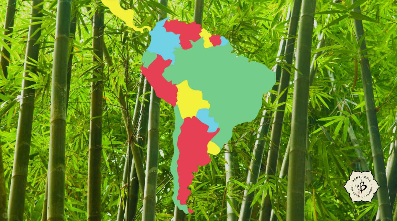 Bamboo of South America